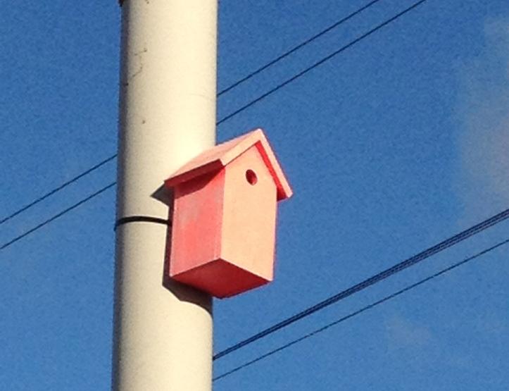 Om bij Mediamatic -daar werd Da Gustare 2013 gehouden - volg je de roze vogelhuizen. Leuk!