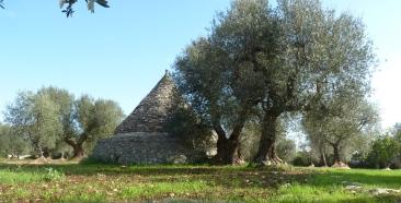 Trullo olijfgaard