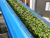 Olijven, olijfolie, Carolis
